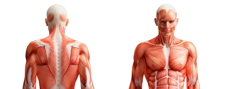 trasplante-cuerpo