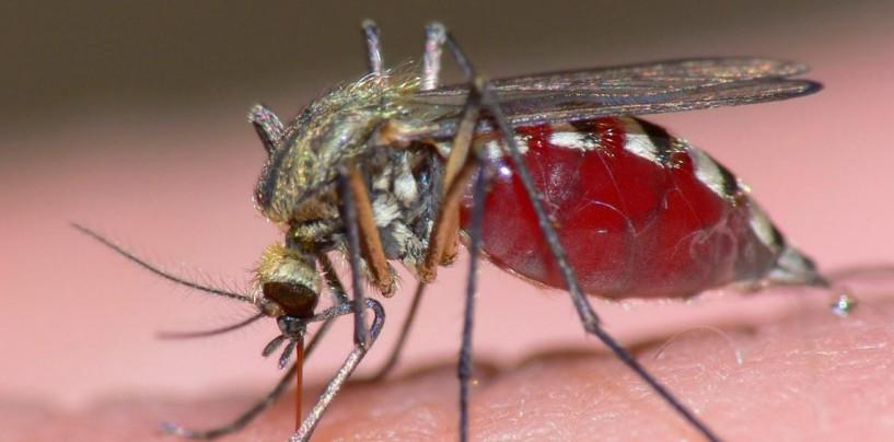 Amenaza por el virus zika en el país